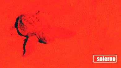 Photo of Caretta Caretta, lo spettacolo della schiusa sul litorale di Eboli